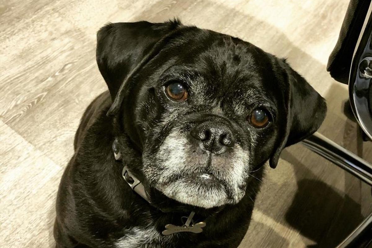 #nationalblackdogday DTF Monty